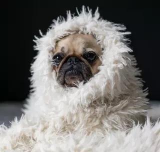 cozy dog